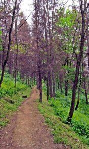 Šetalište Velikog parka na Zabučju koje potiče od vremena Riste Tešića (19. vek) i užičkog predsednika opštine Diše Vučičevića (20. vek) (foto Jadranka Sepi)