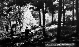 Staze kroz šumu u Velikom parku