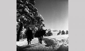 Era mlekadžija (foto Vlajko Kovačević)