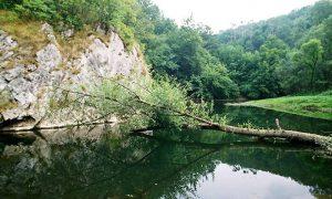 U kanjonu Đetinje (foto Zoran Domanović)