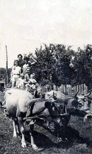 Buše vuku kola sa ljudima (fotografija rodbine Predraga Kovačevića)
