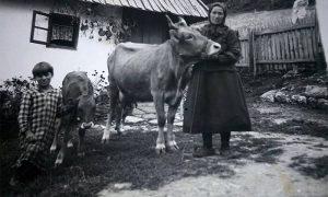 Buša Zlatka i tele Bulkica 1936 (fotografiju podelila Snežana Varga Milanović)