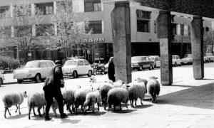"""Mnogi đedovi i bake su obilazili okolo, tražeći """"nestali Žitni pijac"""", zajedno sa svojim stadima"""