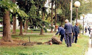 Borovi u Malom parku, januar 2000.
