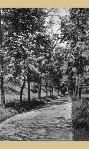 Centralna šetališna staza Ristinog parka