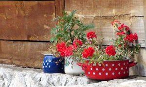 Cveće u Drvengradu