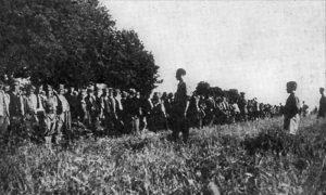 Obrada vojvođanskih polja 1945.
