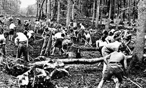 Na samom početku gradnje su se krčile i stoletne šume