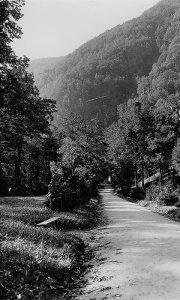 Veliki park dok je o njemu brinuo Desimir Simić - Desko Gujar