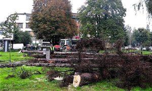 Posečeni zaraženi borovi u Parčiću
