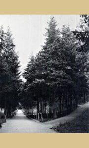 Raskrsnica u Velikom parku 1962.
