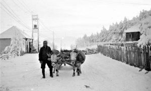 Zlatibordki rabadžija 1960. godine