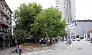 Drveće na Cvetnom trgu